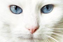 Cat Stuff / by Gina Thurmond