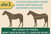 Feeding Horses / Quick tips for proper feeding practices for foals, adult horses, and older horses