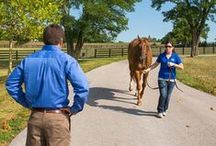 Equine Soundness & Lameness / Quick tips for prevention, diagnosis, and treatment of leg lameness and hoof issues. Find more info at http://www.thehorse.com/topics/lameness