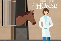 General Horse Health / Quick tips to help you care for the health and management of your horse.