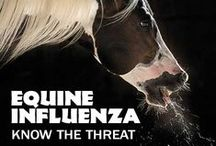 Equine Diseases & Conditions / Quick information on equine diseases and conditions: what to look for, prevention, and treatment.