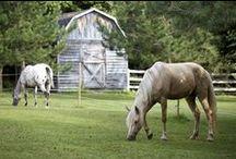 Horse Pasture Management / Information about pasture management, poisonous plants, etc.
