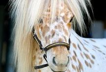 Unique Horse Colors and Markings / Unique color patterns and markings of horses