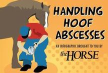 Equine Hoof Care / Tips and information about horse hoof care.