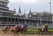 Thoroughbred Racing / Information about famous Thoroughbreds, caring for racehorses and more.