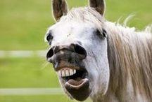 Equine Dental Care / Information on horse teeth, equine dentistry, dental problems and more.