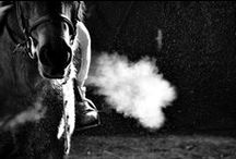 Equine Respiratory Problems / Information about the horse's respiratory system and respiratory problems.