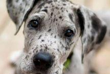 Puppy love<3