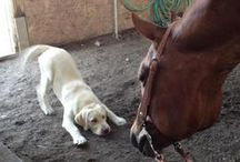 Best Buds / Horses and their companions