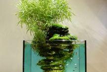 mini akvarium