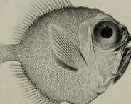 scientific Illustration /  vedecká ilustrácia