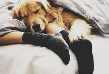 Cozy, warm, magical...