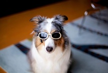 Customer Photos / by Doggles Corp