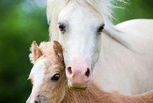 Horses, Donkeys & Mules / by Christine Aldridge
