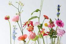: | Kwiaty | flowers | :