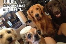 Too cute...and/or Funny / Animals, animals, animals!! I love them all! / by Vanie L.