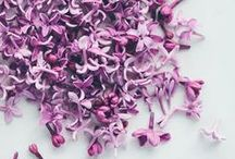 TREND: Radiant Orchid / by Kimberly | A Night Owl Blog