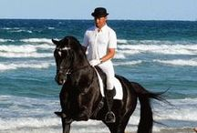 Horseback riding holidays / Horseback riding holidays