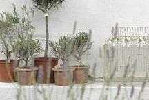 # Donice, żardiniery ... | planters #