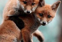 Beautiful animals/man wat zien ze moeij! / Hiele moeie bieeste!