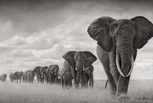 Wild animals / by Kim