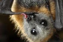 Batty batty bats / Bats, quit being so awesome and adorable. Or quit having rabies so I can hang out with you. PICK ONE.