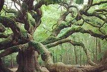 LOVE of Trees / Awareness