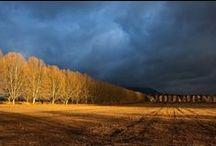 AUTUMN / Trees in their Autumn Splendour