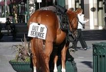 Horsing Around (Funny Finds) / Equestrian Humor :-)