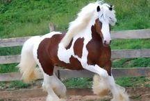 Beautiful Creatures / Beautiful horses