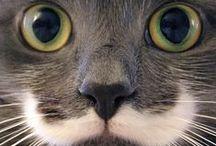 cute animals / animais fofuchos, muito bonitinhos!!!!!