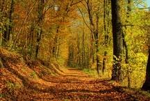 Natuur foto's van Ik-Leef.nl / Onze natuur foto verzameling