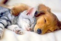 Puppies and Kitties / Who would have thunk? Unlikely friends.