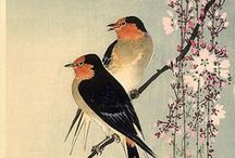 Wood & Birds