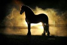 Horses - The Gentle Beauty / Horses, of course.