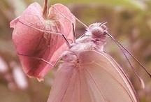 Flutter by Butterfly!