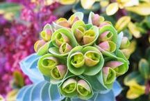 Sensational Succulents / by Mary Jane Gearhart