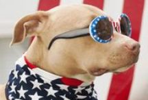 Red, White, and Blue Board / Celebrate the 4th of July in style. Great food, blowing stuff up, dressing up our pets, and more food.  / by Checkers Foods