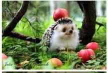 Cute Animals / by Ashley Licari