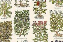 Herbal Stuff / by Betty Pillsbury