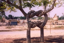 Circus, Odd, Twisted Trees / by Barbara Richter