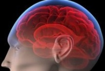 The Brain & Learning / by Kim Gabelmann