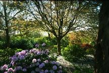 RHS Gardens / The four RHS Gardens: Wisley near Woking, Surrey, Hyde Hall near Chelmsford, Essex, Harlow Carr, near Harrogate, Yorkshire, and Rosemoor near Great Torrington, North Devon. All offering free entry to RHS members.