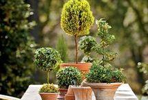 Terrific Topiary