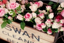 Romantic ♡Roses / Roses are the romance of flowers...... Fragrances so delicate.... Colours so beautiful.......