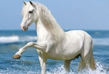 Horses are gentle creatures / beautiful graceful horses