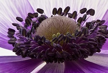 Purple Delight / Love purple....all the incredible shades..... Such a rich majestic colour............