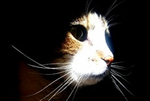 Cats ♥I Love / What divine creatures Cats are.........