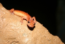 Cave Dwellers / Check out the rare cave biota-Binkley is one of just 21 cave systems with 20+ species of animals.