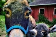 Animalia: Rural Life / by Nancy McNamara